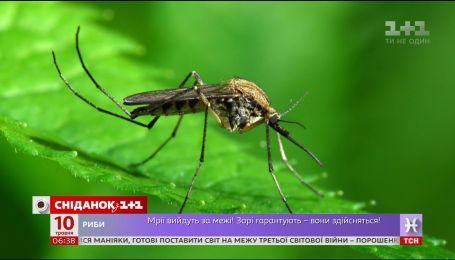 Почему комары нещадно кусают не всех людей - инфекционист Любовь Концидайло