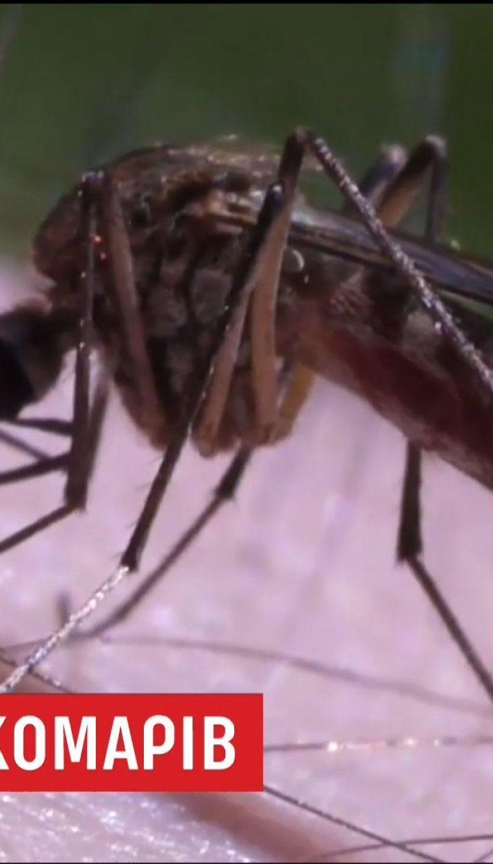 Из-за теплой погоды в Украине увеличилось количество комаров