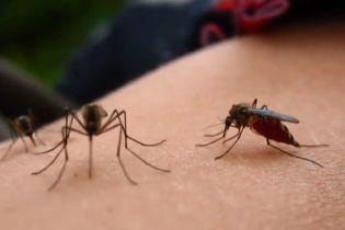 В Україні розплодилися комарі: комах стало втричі більше за норму