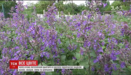 В Україні зацвіли рослини, які не мають квітнути одночасно