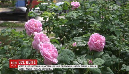 В Украине расцвели растения, которые не цветут одновременно