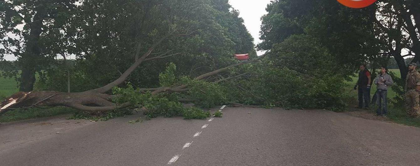 В Киеве и области сильный ветер повалил деревья