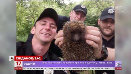 В Черновцах полицейские спасли ежа от смерти