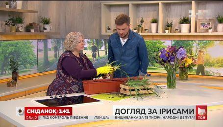 Наталья Подлесная рассказала, как правильно делить карликовые ирисы
