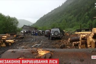 Скандал із вирубкою лісу на Закарпатті: СБУ говорить про незаконні схеми, а підприємці – про рейдерське захоплення