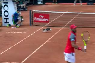Тенісист мало не прибив кота, який вибіг на корт просто посеред матчу
