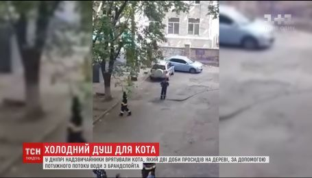 У Дніпрі працівники ДСНС зняли з дерева кота потужним потоком води з брандспойта