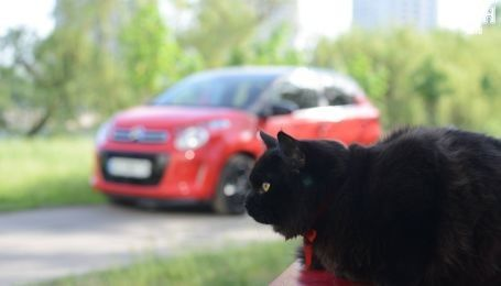В США был замечен кот-беспилотник