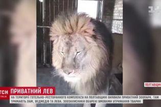 Під Полтавою на приватній території утримують лева