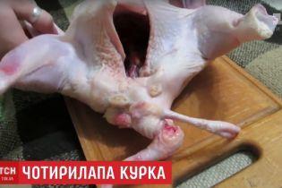 Мутант на вечерю. Родина з Харкова купила в супермаркеті чотирилапу курячу тушку