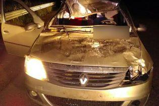 На Полтавщині жінка загинула після зіткнення автомобіля з лосем