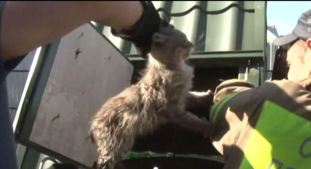 На Львівщині з 20-метрової криниці витягли переляканого кота (ВІДЕО)