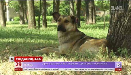 Почему надругательство над животными в Украине остается безнаказанным