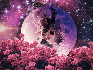 """Как пережить """"полнолуние цветов"""" 29 мая"""
