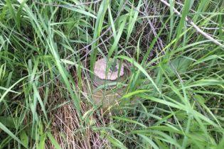 На Луганщине возле границы с Россией обнаружили взрывные устройства