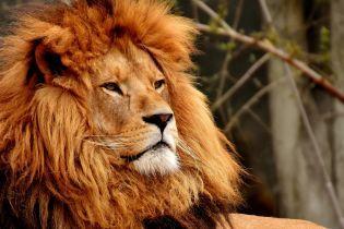 На Тернопольщине в зоопарке лев набросился на подростка и изранил его
