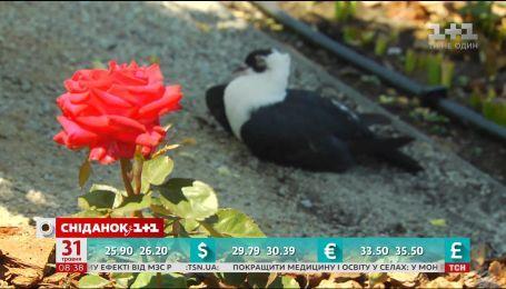 На Киевщине открыли уникальный парк цветов