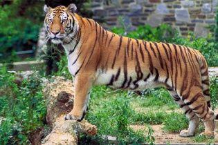 Из немецкого зоопарка на волю убежало полдесятка хищников