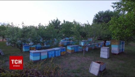 В Украине из-за мощных инсектицидов начали массово умирать пчелы
