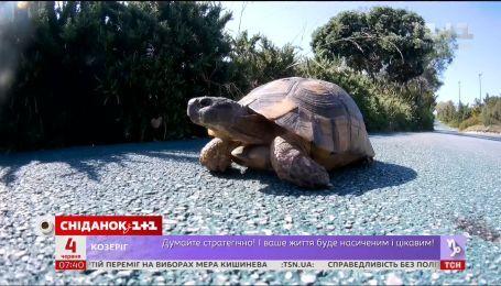 Мій путівник. Пелопонес - узбережжя зеленої морської черепахи і традиційний грецький побут