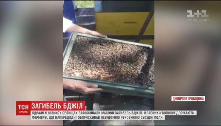 На Днепропетровщине пчеловоды обвиняют местного фермера в массовой гибели пчел
