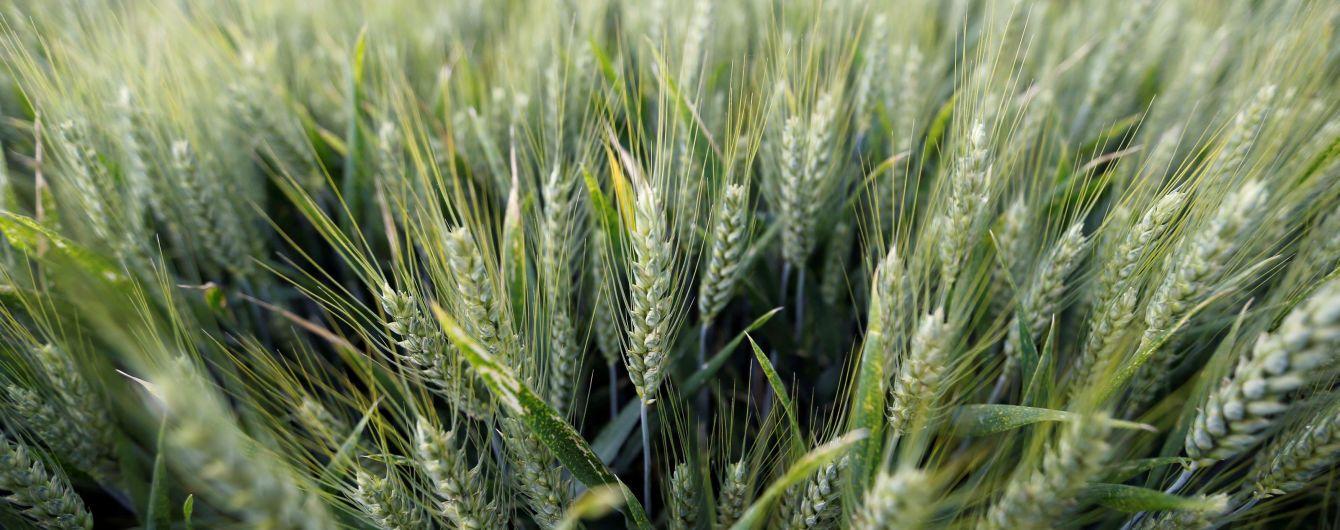 На Житомирщині пожежа знищила понад 20 га пшениці