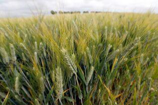 Урожай-2018: фермери говорять про втрати, а експерти пророкують зростання цін