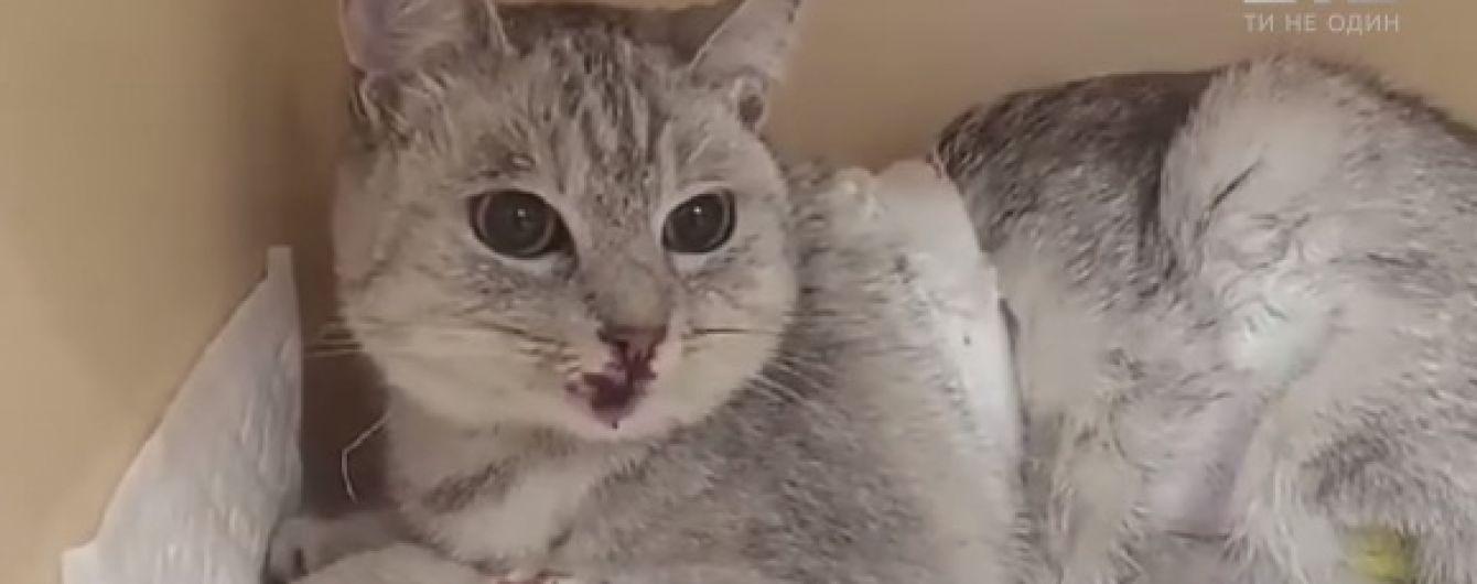 У Києві жінка викинула з вікна 6-го поверху кішку під час сварки з чоловіком