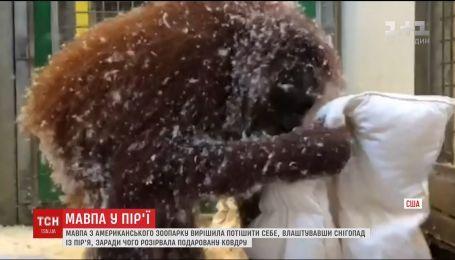 Интернет забавляет видео, на котором обезьяна устроила снегопад с перья