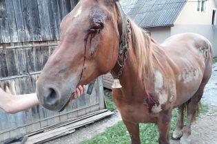 На Закарпатье пьяный мужчина привязал коня к машине и протащил его по асфальту