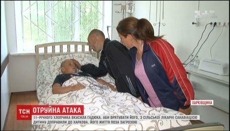 11-летний мальчик в тяжелом состоянии оказался в больнице из-за укуса гадюки