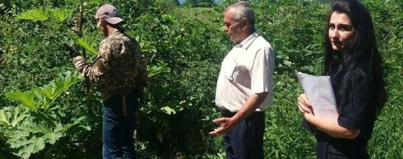 На Прикарпатті неплатника аліментів змусили косити отруйну рослину