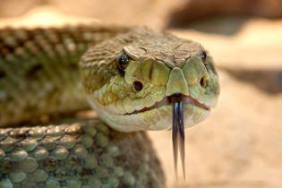 У США чоловіка вкусила та ледь не вбила зміїна голова, яку він сам і відтяв