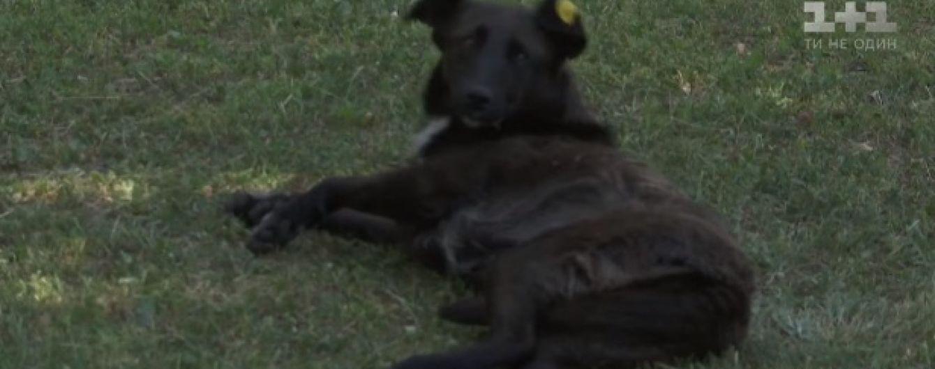 У Кропивницькому за кілька тижнів невідомі отруїли близько двох сотень собак