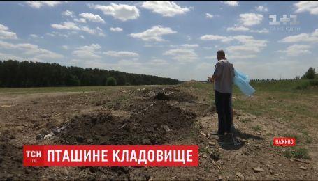 На Київщині виявили могильник, куди відомий агрохолдинг закопував рештки птиці