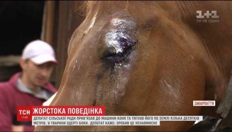 Депутат сільради на Закарпатті покалічив коня, бо той випасався на його сінокосі