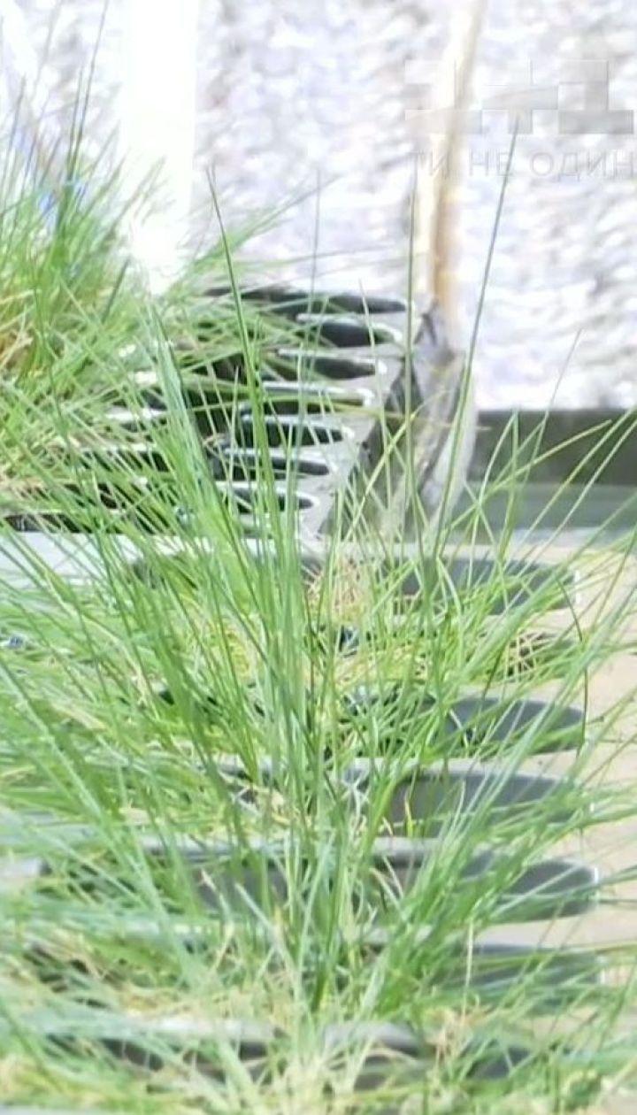 Українці знайшли рослину, що може вилікувати раку шкіри і дати пшениці стійкість до морозів