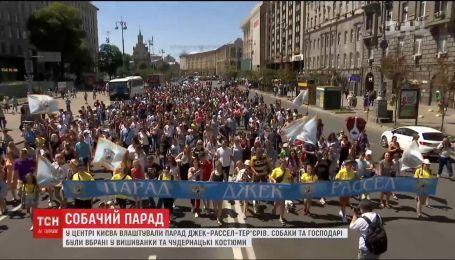 В Киеве состоялся парад Джек Рассел терьеров