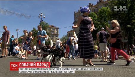 Пауки, Микки Маус и даже футбольные игроки - в Киеве состоялся парад Джек Рассел терьеров