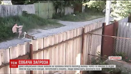 На Харьковщине бойцовские псы чуть не убили человека