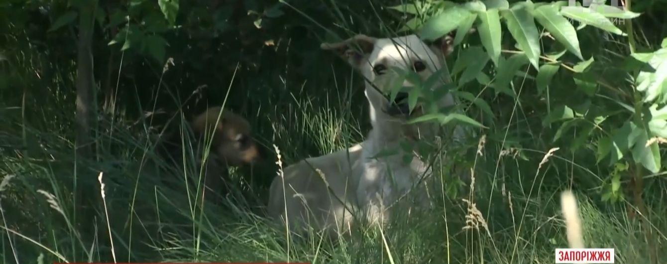 В Запорожье живодеры сожгли заживо нескольких щенков в парке