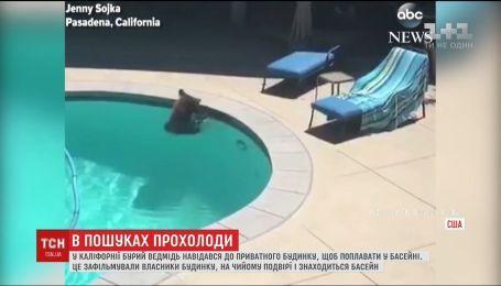 В Калифорнии медведь спасался от жары в бассейне частного дома