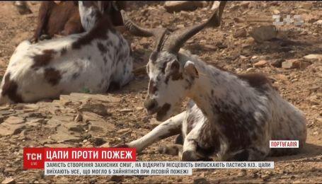 В Португалии с пожарами борются с помощью коз