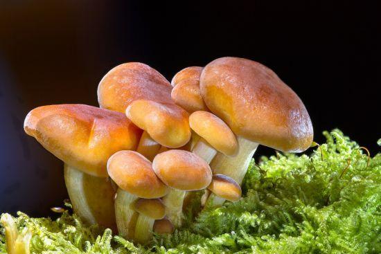 На Луганщині від отруєння грибами помер 8-річний хлопчик