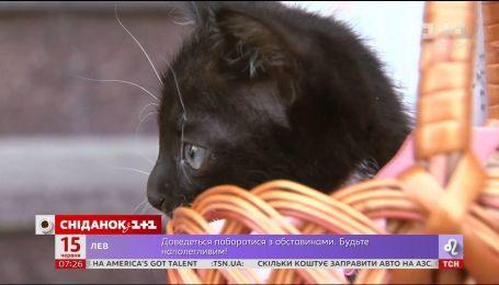 """Первый счастливчик: одного из котят """"Сніданка"""" забрали в семью"""