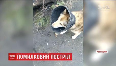 На Рівненщині депутат замість вовка збив породистого собаку