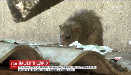 Одесити страждають від нашестя щурів