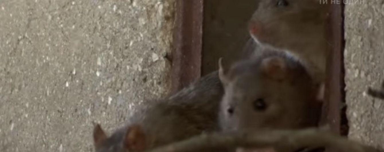 У центрі Одеси десятки родин страждають від нашестя щурів