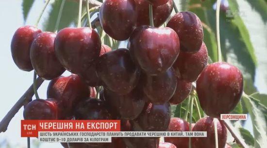 На китайському ринку готові викладати за українську черешню 9-10 доларів за кілограм