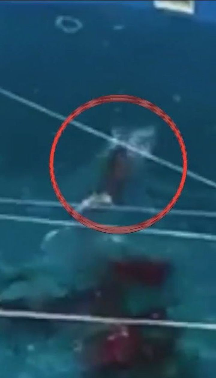 В Одесі дельфінятко народилося під час шоу